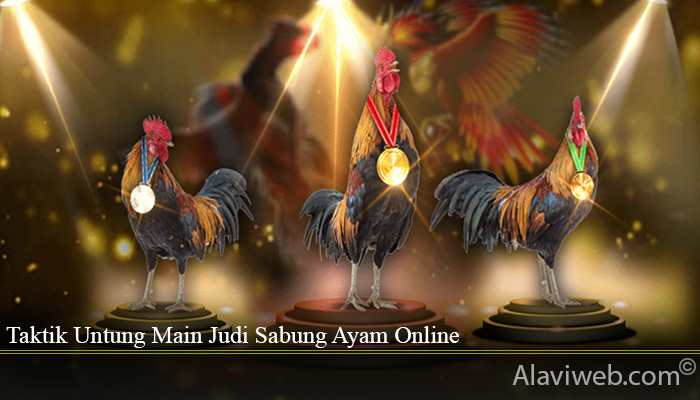 Taktik Untung Main Judi Sabung Ayam Online
